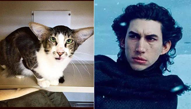 adam-drive-cat