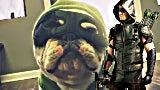 arrowbulldog