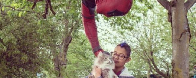 deadpool cat