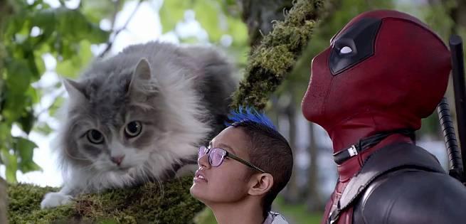 deadpoolcat