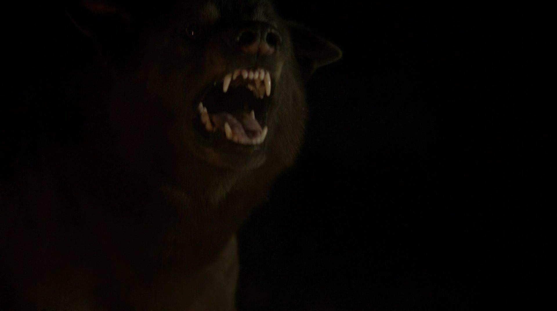 Shaggydog 1x10