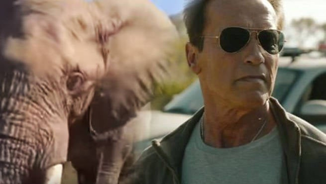 Arnold Schwarzenegger Gets Chased By A Wild Elephant
