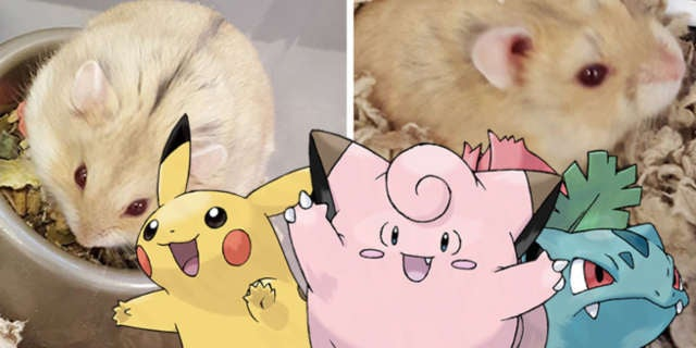Pokemon GO Animals