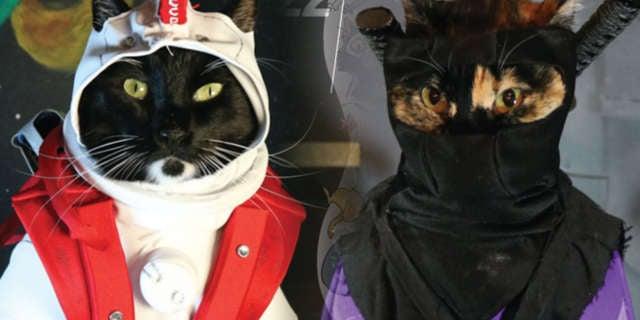 Cat Cosplay Header