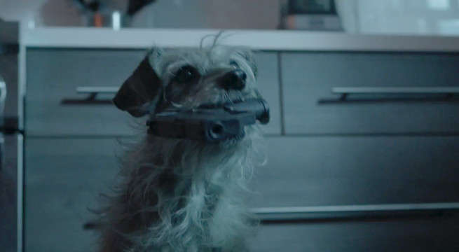 John Wick Parody Sees The Dog Survive And Out For Revenge