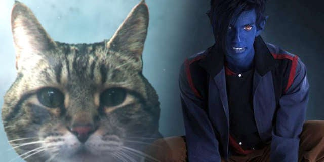 Nightcrawler-Cat