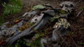 kovar-skeleton
