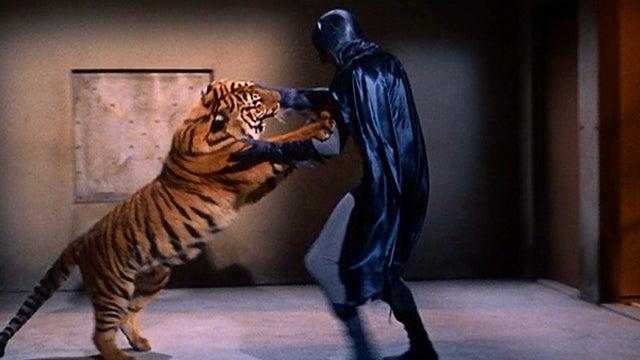 Batman-Tiger