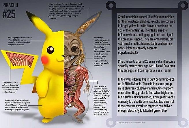 Pikachu PokeNatomy