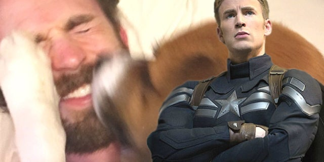 chris evans dog