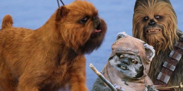 national dog show 2017 star wars ewok chewbacca