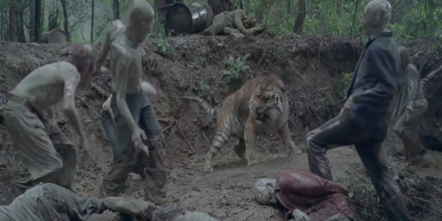 The Walking Dead Shiva tiger