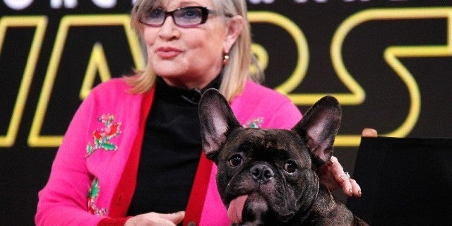 carrie-fisher-gary-the-dog-tribute
