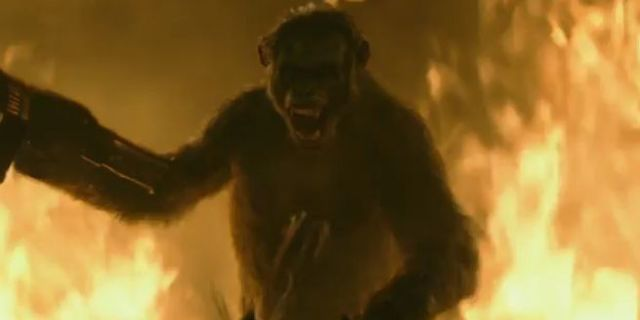 War for the Planet of the Apes  Planet of the Apes Wiki