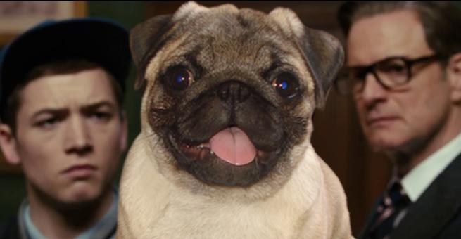 Kingsman Film Pug