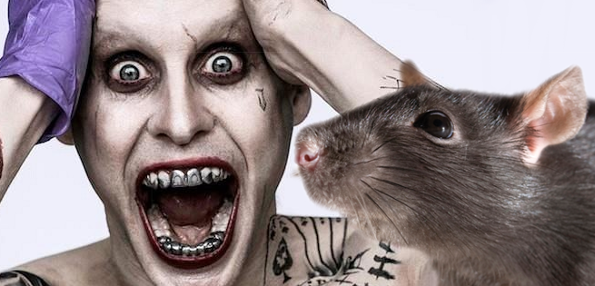 Here's The Rat That Suicide Squad's Jared Leto Gave To Margot Robbie