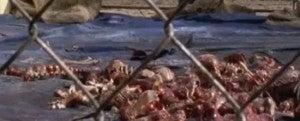 terminus-cannibal-skeletons