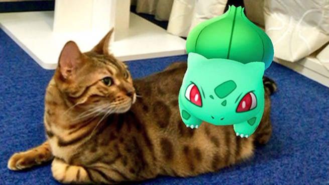 Pets and Pokemon GO