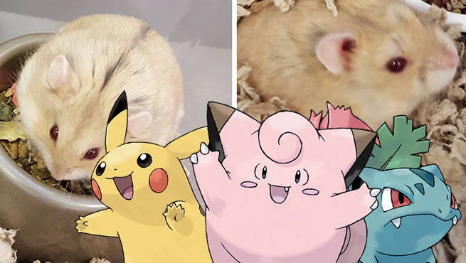 Pokemon GO Animals