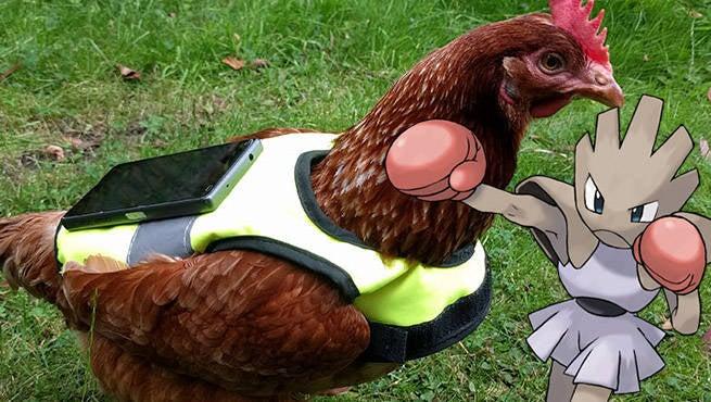 Pokemon GO Chickens