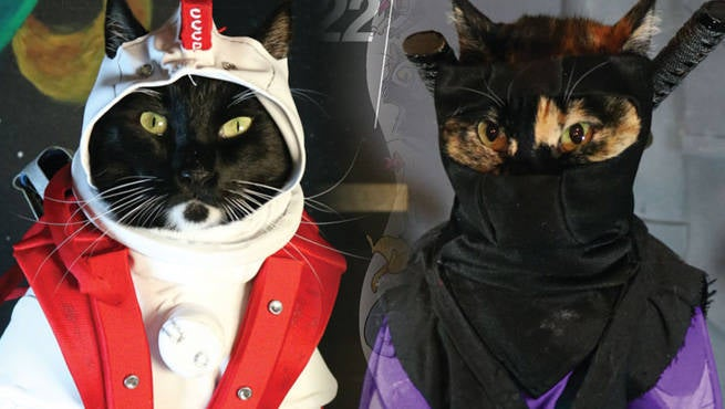 Cat Cosplay Header
