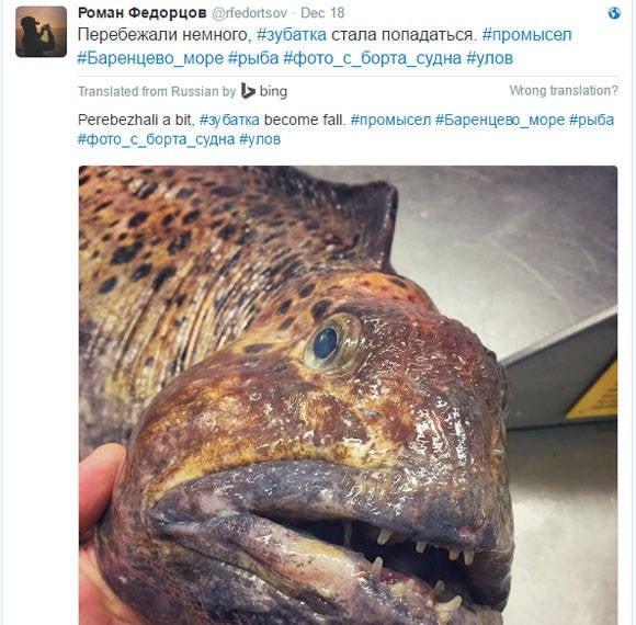 russian deep see fisherman creature 2