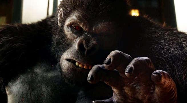 gorilla-grodd