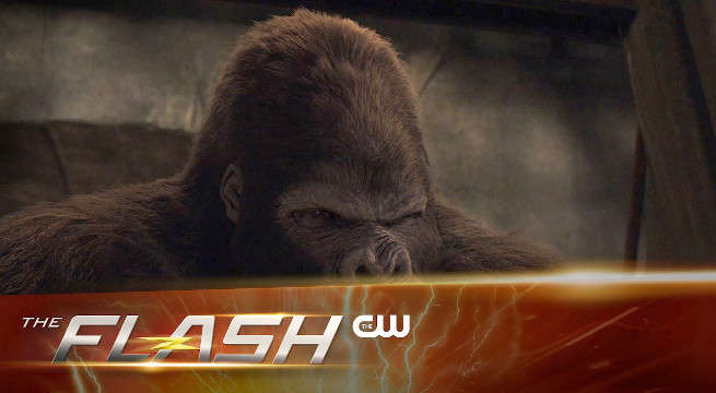 the flash grodd gorilla city