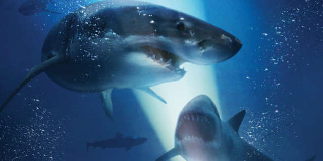 47 meters down mandy moore claire holt thriller movie
