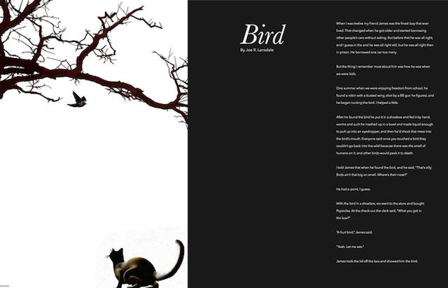 Full-Bleed-Bird