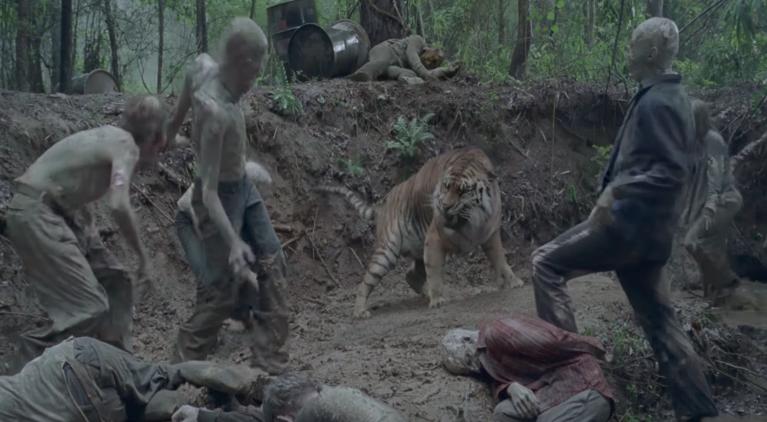 The Walking Dead Shiva tiger