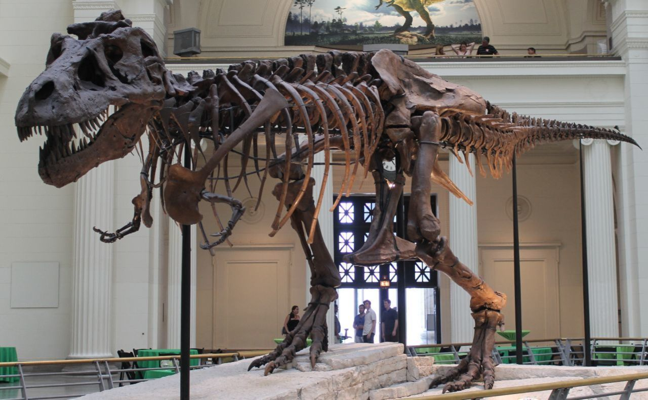 A T-Rex in a Chicago Museum Is Playing 'Dungeons & Dragons