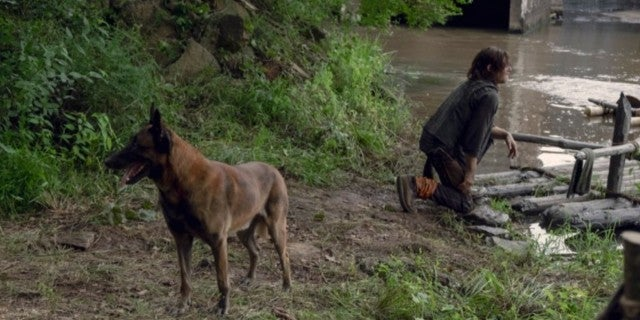 The Walking Dead 907 Daryl dog