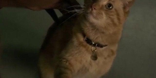 captain marvel cat goose chewie flerken