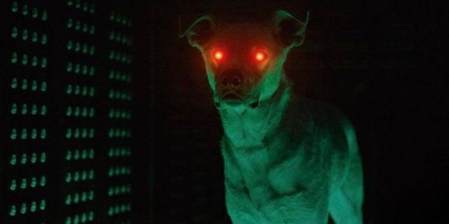 krypto superdog dc universe header