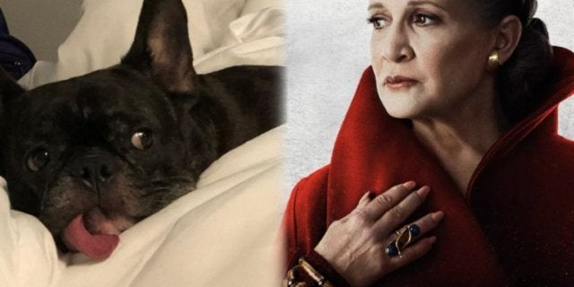 "Carrie Fisher's Dog Gary ""Retires"" to Florida Beaches"