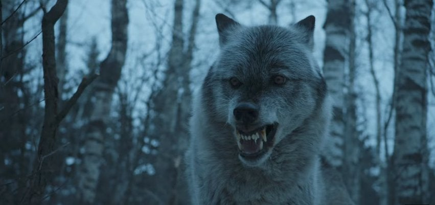 game of thrones wolf wolves direwolf direwolves