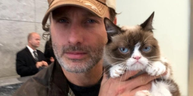 lincoln_grumpy_Cat
