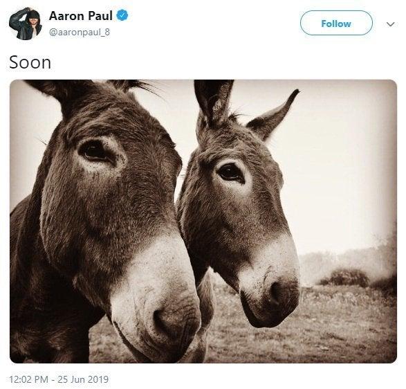 aaron paul donkey photo breaking bad
