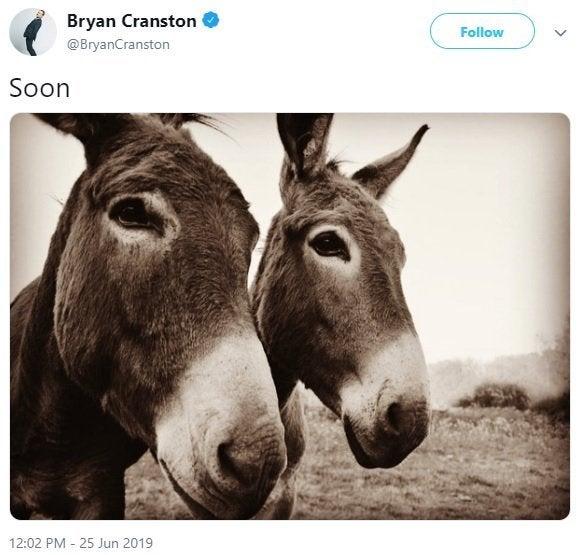 bryan cranston donkey photo breaking bad