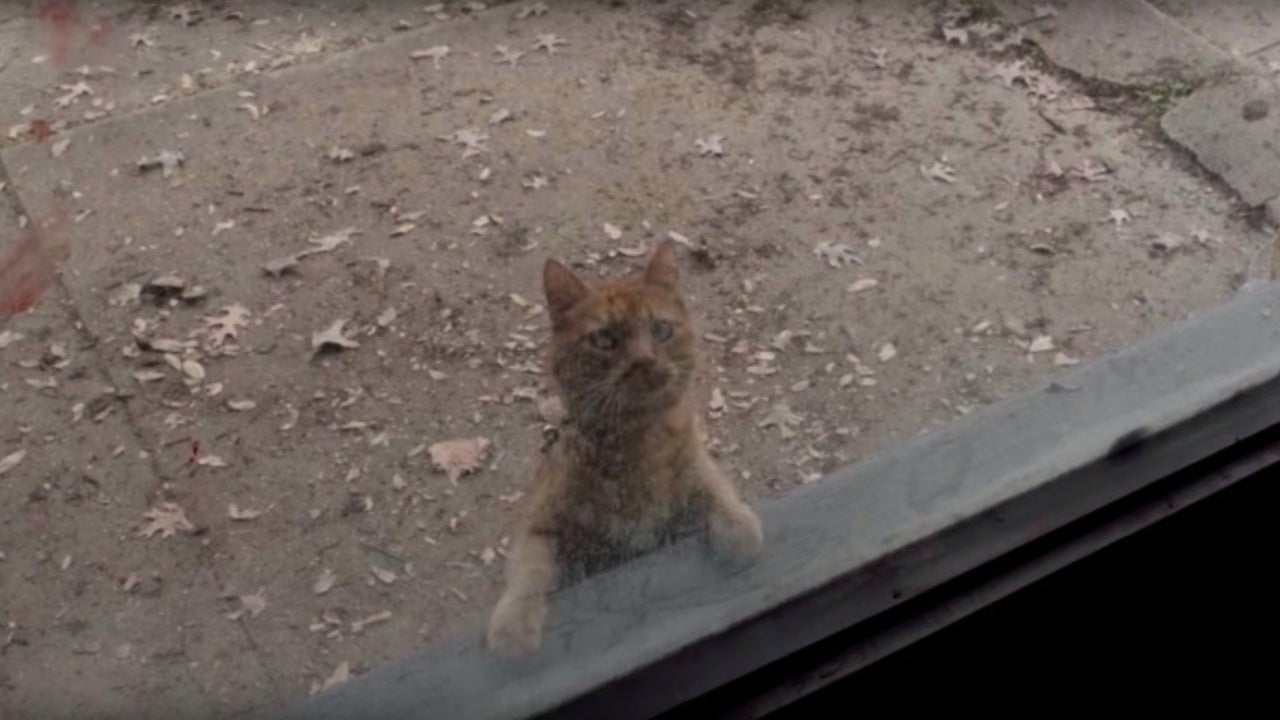 Walkers Paw at a Cat Named Skidmark in Fear the Walking Dead 504 Preview