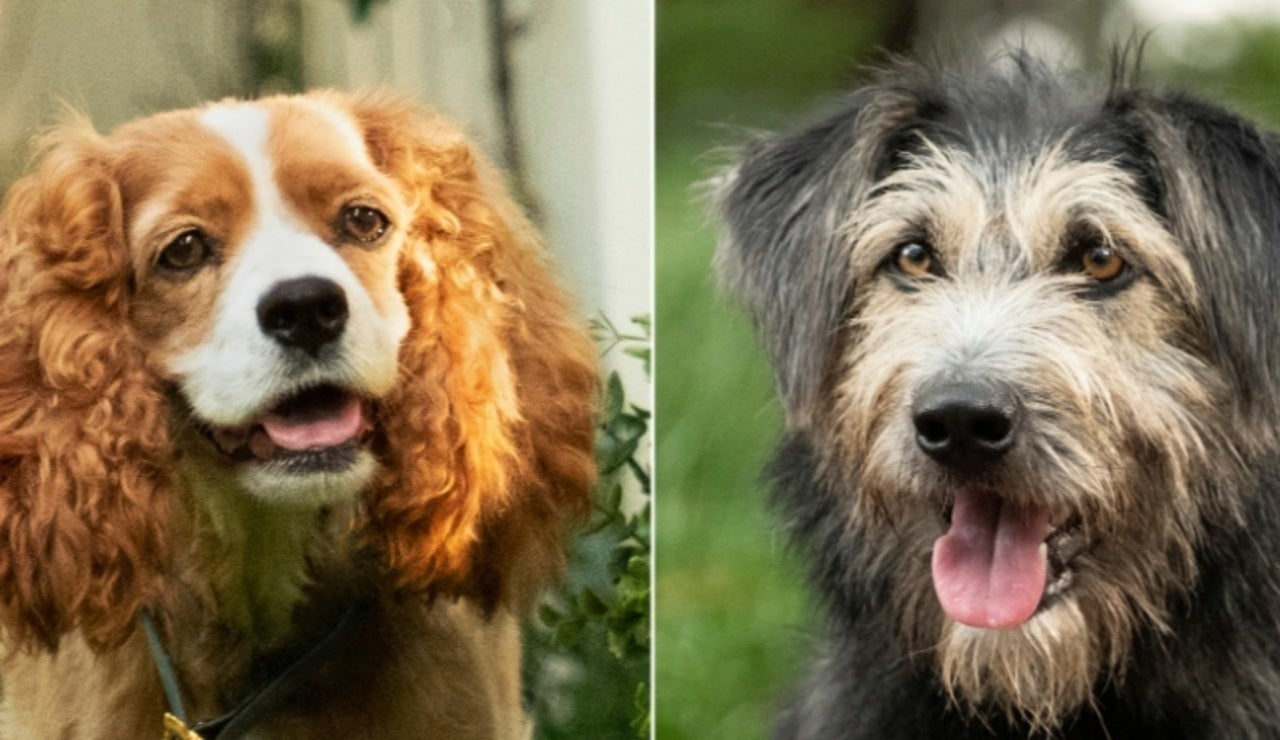 Disney Reveals First Images of Live-Action Lady and the Tramp Characters