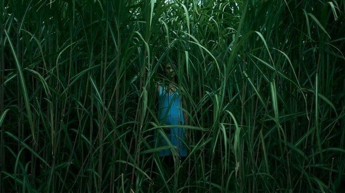 in the tall grass movie netflix