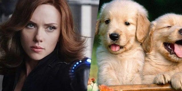 scarlett-johansson-black-widow-puppies-party