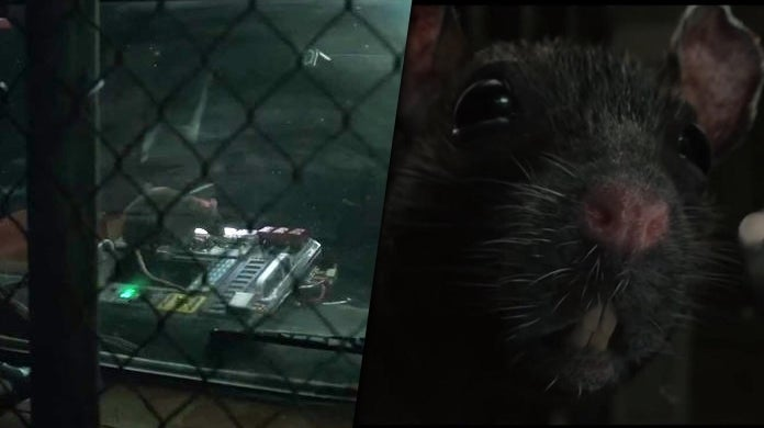 avengers endgame rat