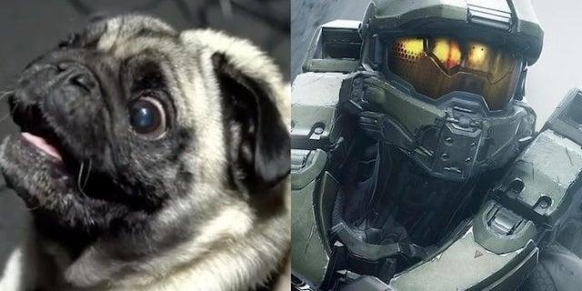 Meet Gyoza, The Pug Behind Halo Infinite's Alien Noises