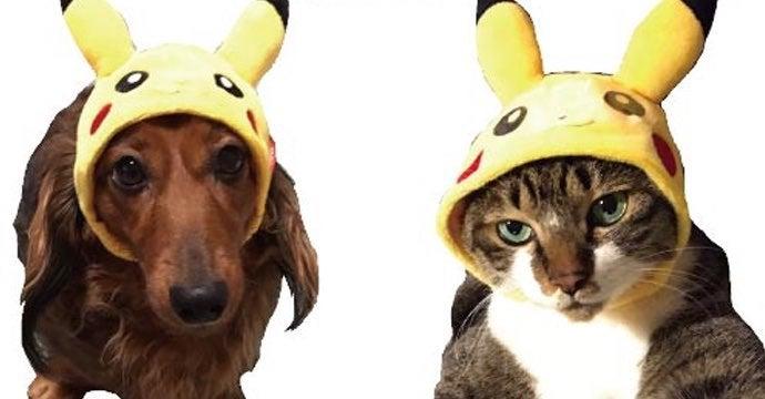 pokemon pet clothes