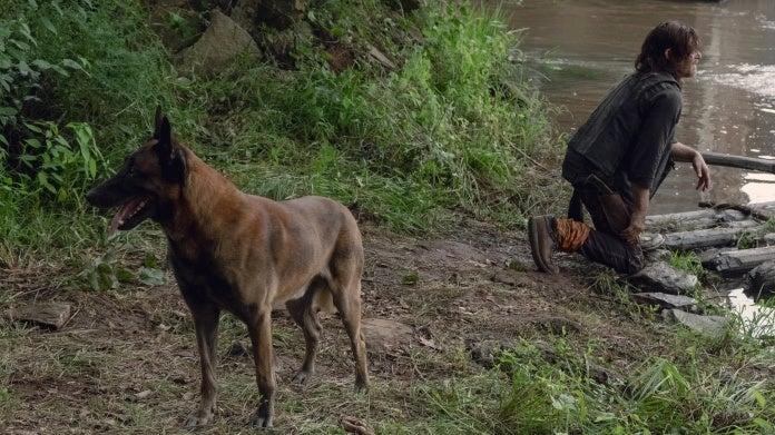 The Walking Dead Daryl Dog