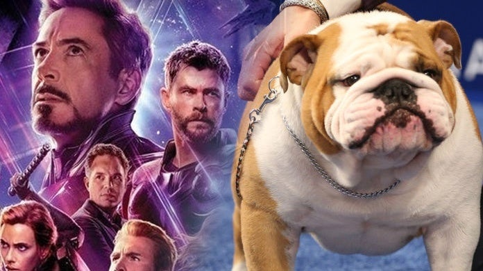 Avengers-National-Dog-Show-Thor-Best-in-Show