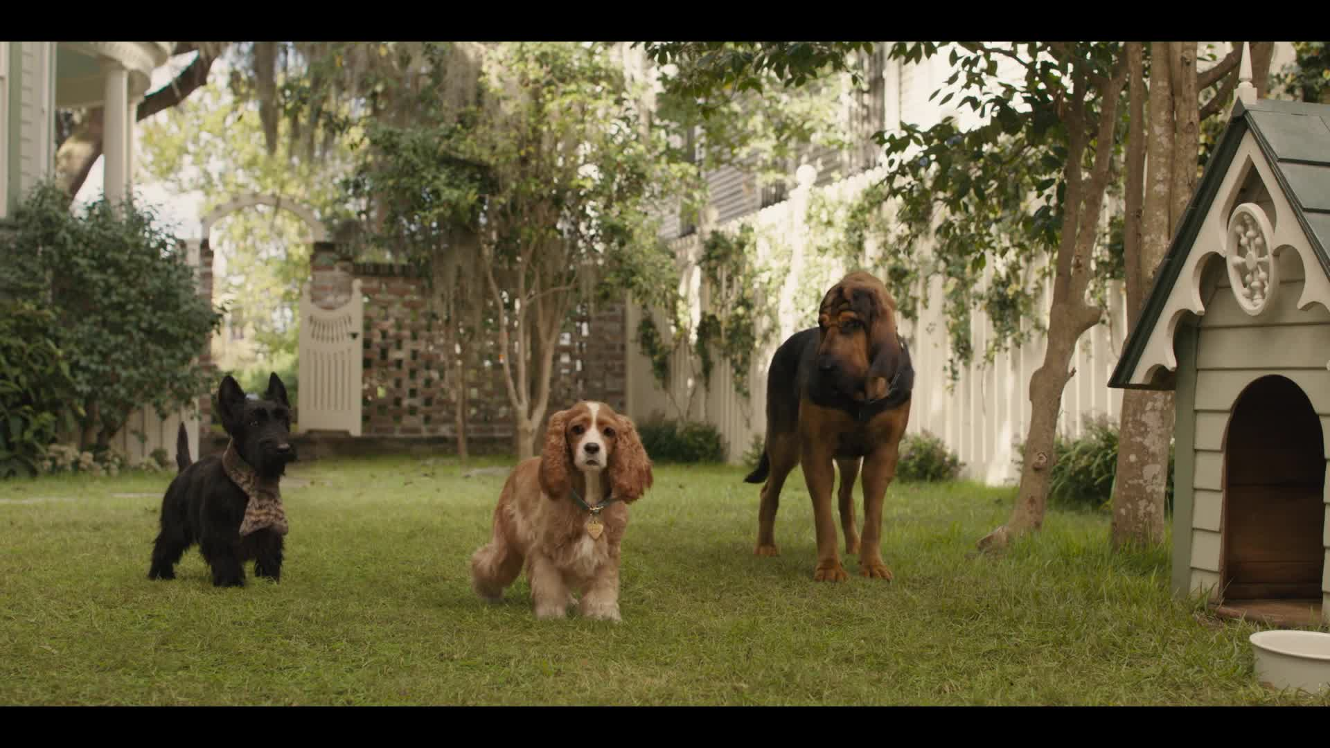 Lady and the Tramp - Movie Clips 1-2 [HD] screen capture